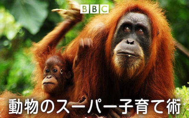 動物のスーパー子育て術